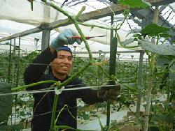 CucumberHarvest-03.png