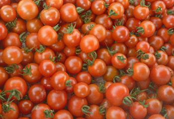 mini-tomato.png